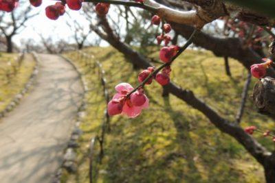 痒い所に手が届く、春。